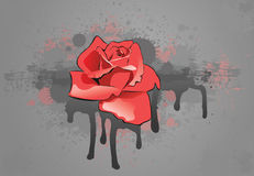 Red rose. On a grey background with drop Royalty Free Stock Image