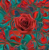 Red rose on a abstract red green backgrund Royalty Free Stock Images