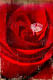Red rose on aged wall Stock Image