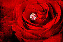 Red rose on aged wall Royalty Free Stock Photo