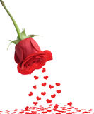 Red Rose And Fall Heart Royalty Free Stock Photography