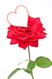 Red Rose And Heart Stock Photos
