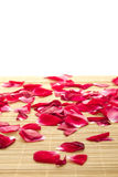 Red Rose And Petals Royalty Free Stock Image