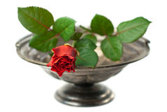 Red rose on antique silver bowl isolated. Close up of antique silver bowl with red rose isolated on white (shallow depth of field Royalty Free Stock Image