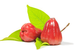 Red Rose Apple Stock Image