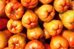 The red rose apple of Thai organic farm Royalty Free Stock Photos