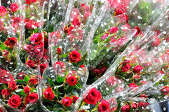 Red rose as gift Stock Photos