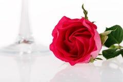 Red rose Stock Photos