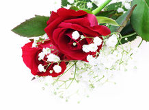 Red rose and baby's breath Royalty Free Stock Photo