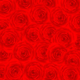 Red Rose Background Royalty Free Stock Photos