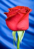 Red rose with background 2. Close up of Gorgeous red Rose with blue shiny silk background Royalty Free Stock Images