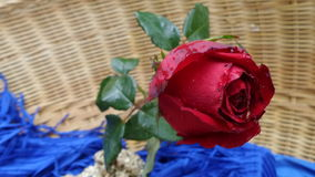 Red rose in basket Stock Images