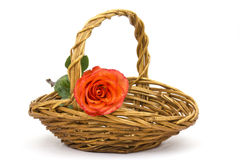 Red rose in a basket Royalty Free Stock Image