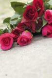 Red rose at beautiful Stock Photos