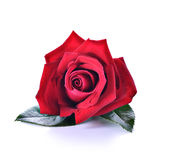 Red rose. Beauty , Love ,Sweet Royalty Free Stock Photos