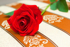 Red rose on beige cloth Royalty Free Stock Image