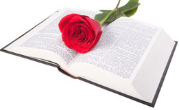 Red rose on a bible. Isolated on white background Royalty Free Stock Images
