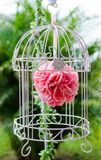Red rose in the bird cage Royalty Free Stock Image