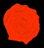 Red rose on black background Royalty Free Stock Image