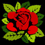 Red rose on black background Royalty Free Stock Photos