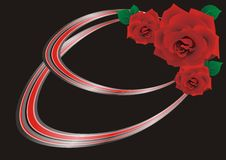 Red rose on a black background Stock Photos