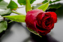 Red rose on a black background Stock Images