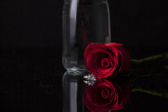 Red rose on black background. Red rose with jar on isolate black background Royalty Free Stock Photo