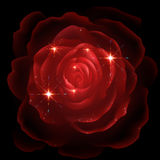 Red rose on black background Stock Photography