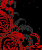 Red rose on black Royalty Free Stock Images