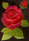 Red rose on black, oil painting Stock Photo