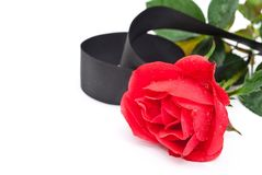 Red rose with black ribbon Stock Images