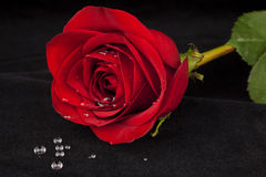 Red Rose on Black Velvet with Water Droplets Stock Photos