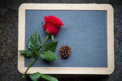 Red rose on blackboard Stock Image
