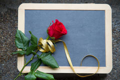 Red rose on blackboard Royalty Free Stock Image