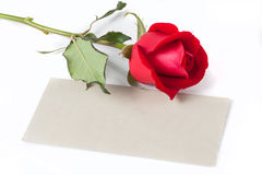 Red Rose with Blank Card Stock Image