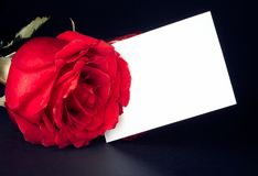 Red rose and blank gift card for text Stock Photo