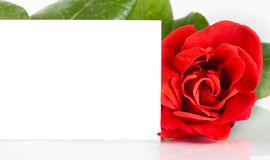 Red rose and blank gift card for text on white background Stock Photos