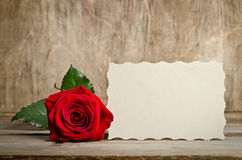 Red rose and blank gift card for text Royalty Free Stock Images