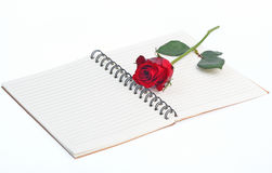 Red rose on a blank notebook isolated on white background Stock Image