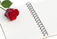 Red rose on a blank notebook isolated on white background Royalty Free Stock Photos