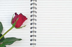 Red rose on a blank notebook isolated on white background Royalty Free Stock Images