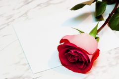 Red rose and a blank sheet of paper Stock Images