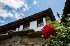 Red rose blossom with blurred Bulgarian house royalty free stock photo