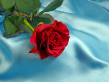 Red rose on blue. Red rose with drops of water on blue satin stock images