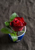 Red rose in a blue ceramic Cup on a dark surface royalty free stock photo
