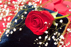 Red Rose on Blue Pillow Royalty Free Stock Photos