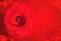 Red rose on blurred bokeh background for Valentine& x27;s Day and wedding anniversary Stock Photos