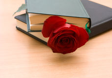 Red rose in a book Stock Image