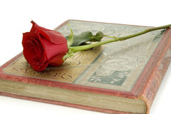 Red rose on book Stock Photography
