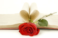 Red rose on a book Stock Image